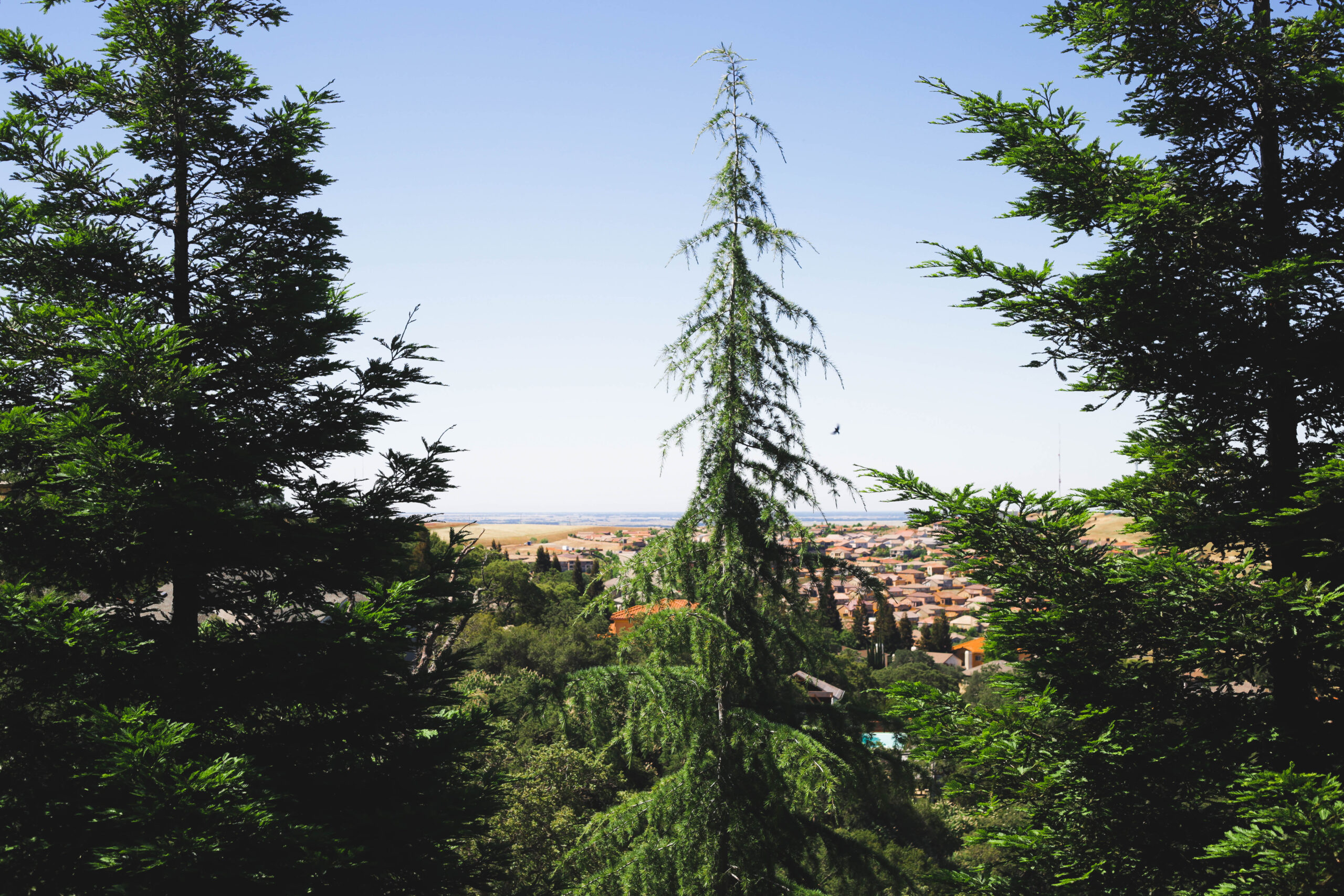 this image shows emergency tree service in carlsbad california