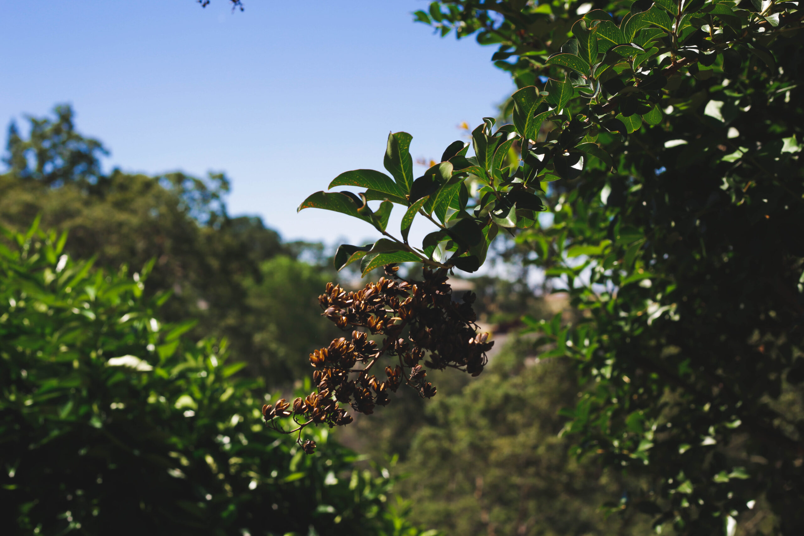 this image shows tree pest control in carlsbad california