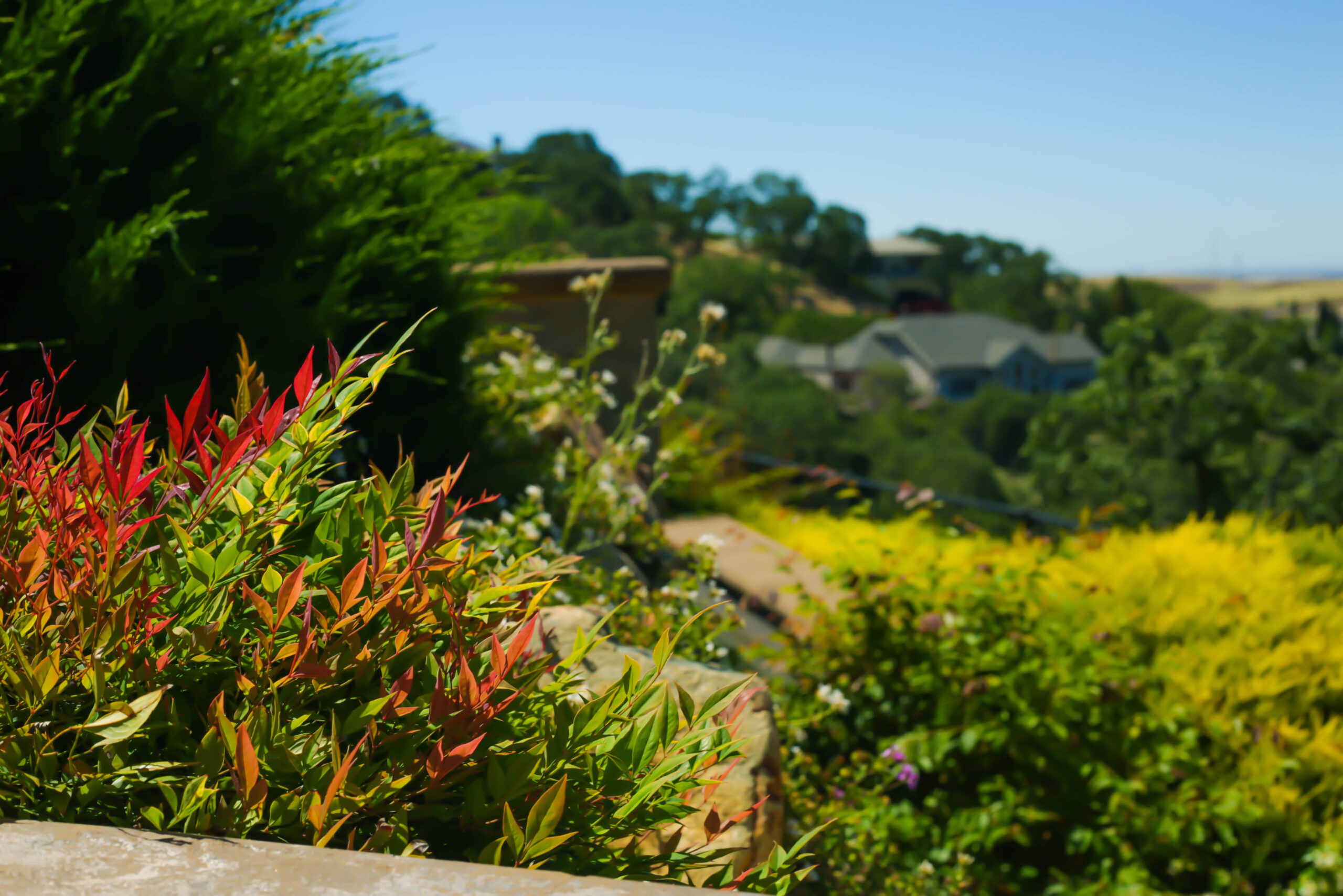 this image shows tree service carlsbad ca