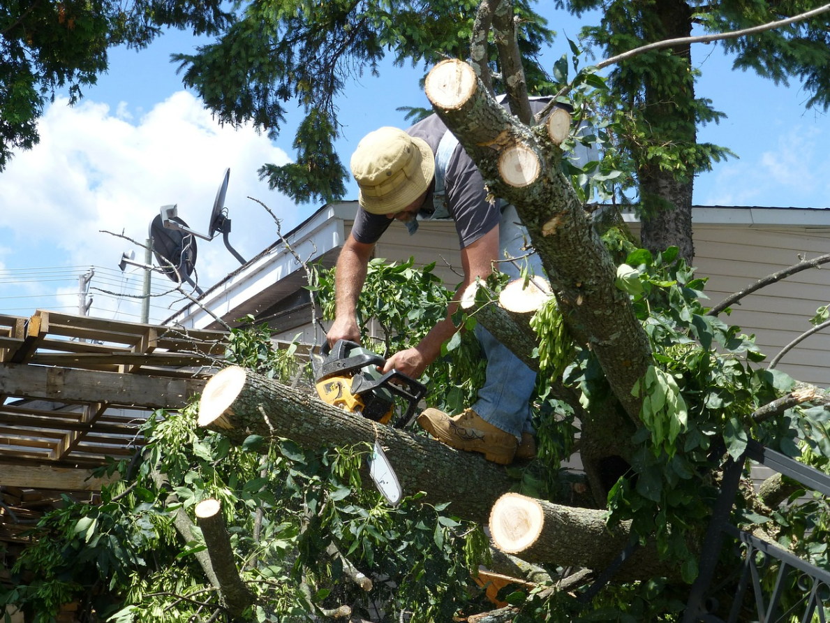 this image shows tree trimming in carlsbad california