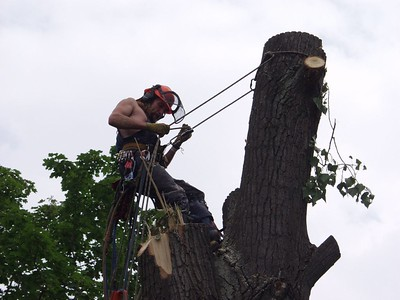 This image shows arborists in Carlsbad, CA.