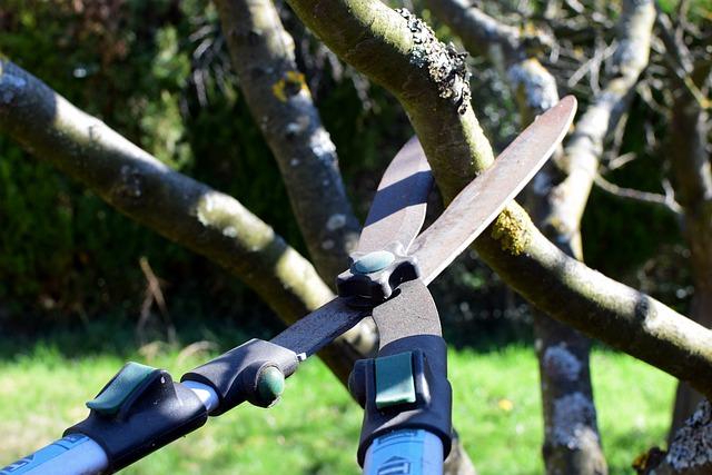 An image of tree pruning in Carlsbad, CA.