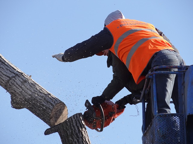 This is an image of commercial tree service in Carlsbad, CA.