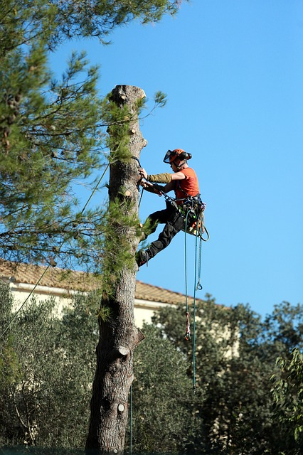 An image of residential tree service in Carlsbad, CA.