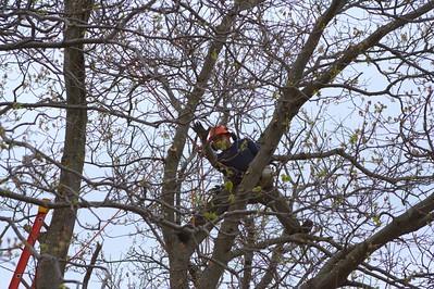 An image of arborist in Carlsbad, CA,