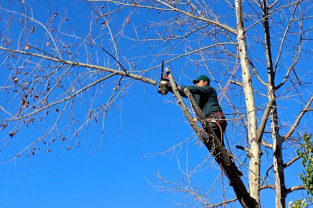 An image of commercial tree service in Carlsbad, CA.