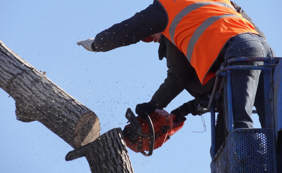 this image shows tree service in carlsbad