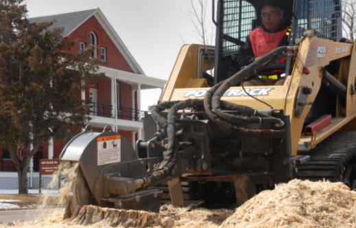 An image of Carlsbad Stump Removal