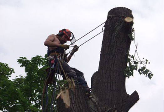 An image of Carlsbad tree doctor.